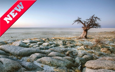 Botswana-Baobab-Tour