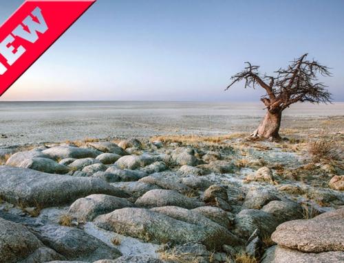 Botswana Baobab Tour