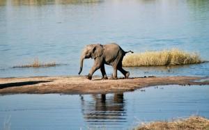 Botswana-Chobe-River