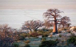 Botswana-Makgadikgadi-Pans-&-Baobabs