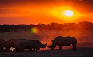 Botswana-Rhino-Sanctuary