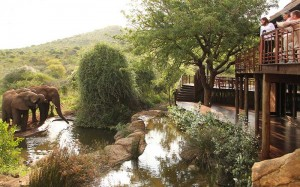 Thanda-Safari-Lodge-Wildlife