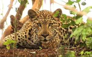 Thanda-Safari-Lodge
